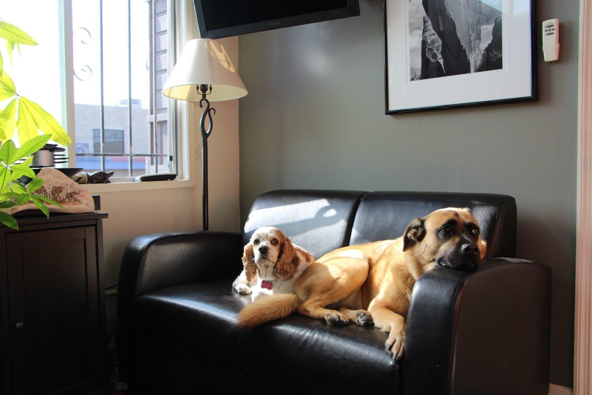 HB-Dogs-Couch-1-1200x800.jpg